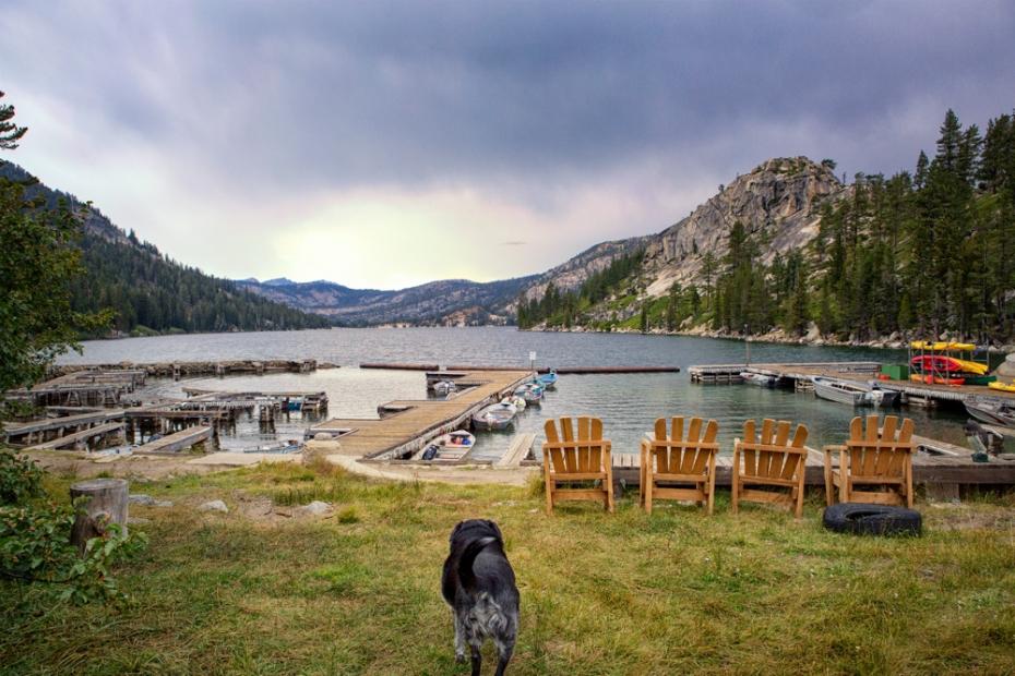 Obie T. Dogg looks over Echol Lake